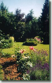 image of rose in garden at Bayview bed and breakfast